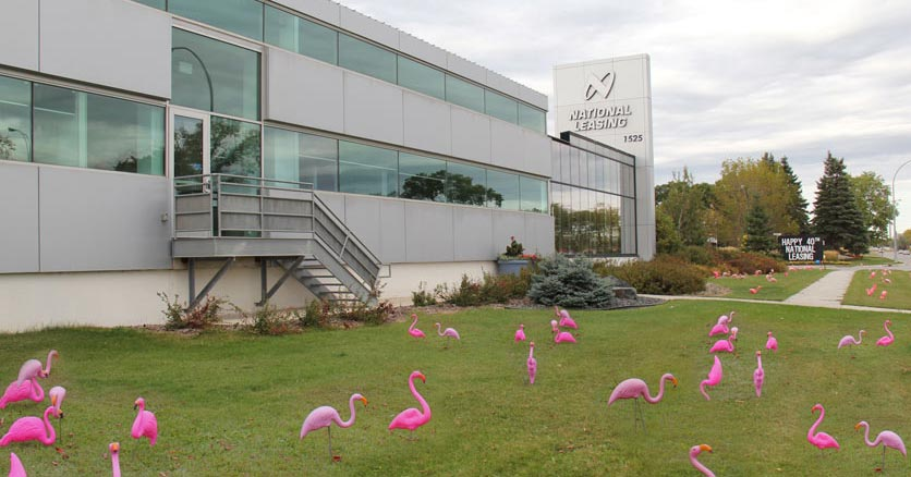 Hundreds of flamingos appear on CWB National Leasing's front lawn as the company celebrates 40 years of success